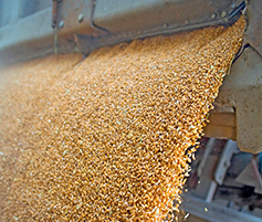 grain processing industry